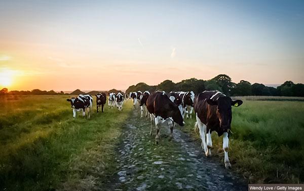 Coronavirus: Farm Safety Partnership urges caution during COVID-19